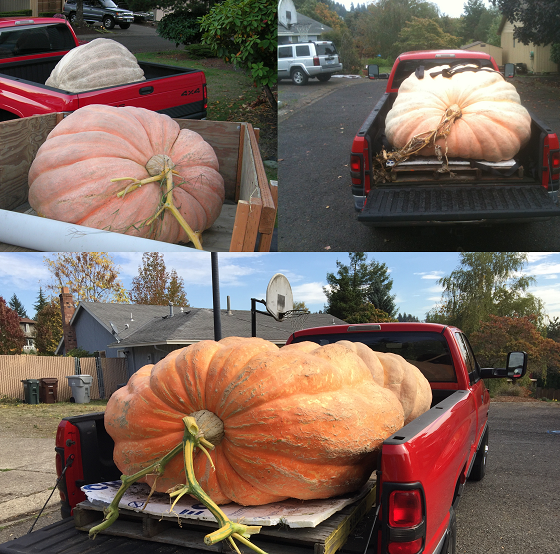 Giant Pumpkin Collage